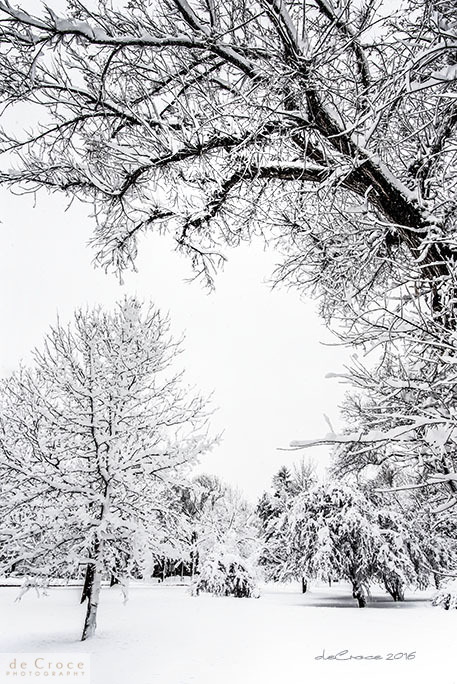 Snow and trees professional photography